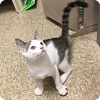 Adopt A Pet :: Chase - Colmar, PA