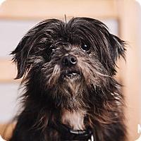 Adopt A Pet :: Felix - Portland, OR
