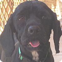 Adopt A Pet :: Fiona - Santa Barbara, CA