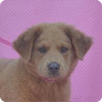 Adopt A Pet :: **PENGA** MEET SEPT 24TH! - Mukwonago, WI
