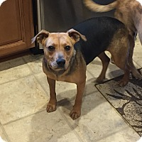 Adopt A Pet :: Cher - Richmond, VA