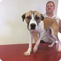 Adopt A Pet :: Blaze - Benton, PA