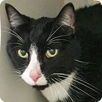 Adopt A Pet :: Caleb - Prescott, AZ