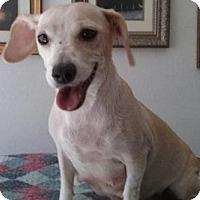 Adopt A Pet :: Miriam - Gilbert, AZ