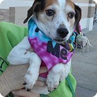 Adopt A Pet :: Betsy-PENDING!!! - Ashland, VA