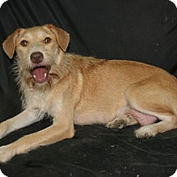 Adopt A Pet :: Golden Girl - Lufkin, TX