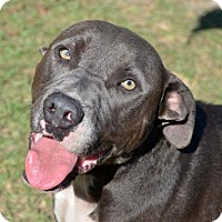 Adopt A Pet :: Sterling - Ridgeland, SC