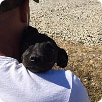 Adopt A Pet :: Bitsy - Foster, RI