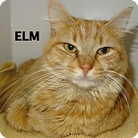 Adopt A Pet :: Elm - Lapeer, MI