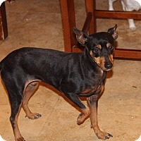 Adopt A Pet :: Ricardo - Phoenix, AZ