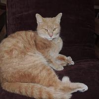 Adopt A Pet :: Magnum $35.00 - Buford, GA