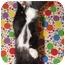 Photo 1 - Domestic Shorthair Kitten for adoption in Orlando, Florida - Mowgli