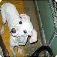 Adopt A Pet :: Waylon - Ardmore, OK
