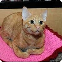 Adopt A Pet :: Eli - Farmingdale, NY