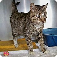 Adopt A Pet :: Chuck - Dover, OH