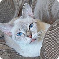 Adopt A Pet :: Aspen - Riverhead, NY