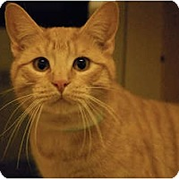 Adopt A Pet :: Louie - Lunenburg, MA