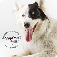Adopt A Pet :: Lucky - Denver, CO