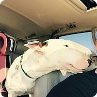 Adopt A Pet :: Dave - Houston, TX