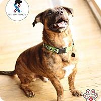 Adopt A Pet :: Braham - Jackson, TN