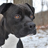 Adopt A Pet :: Brady - New Castle, PA