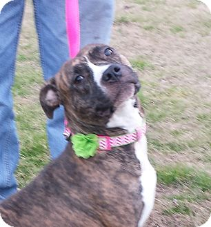 Boxer/Pit Bull Terrier Mix Dog for adoption in Wilmington, North Carolina - NETTIE