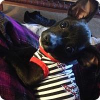 Adopt A Pet :: Prudence (ARSG) - Santa Ana, CA