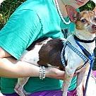 Adopt A Pet :: Jasper (6 lb) Great Family Pet