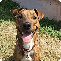Adopt A Pet :: Joon - Austin, TX
