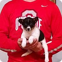Adopt A Pet :: Faith - Gahanna, OH
