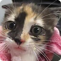 Adopt A Pet :: Leetie - Lincolnton, NC