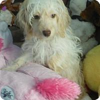 Adopt A Pet :: Bernie - Manchester, NH