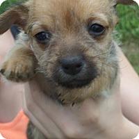 Adopt A Pet :: Wesley - Portland, OR
