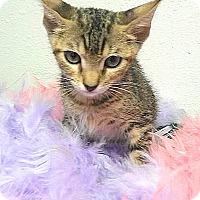 Adopt A Pet :: Athena - Hallandale, FL
