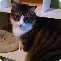 Adopt A Pet :: Rupert - Bridgeton, MO