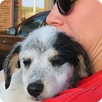 Adopt A Pet :: Leo - Sugar Grove, IL
