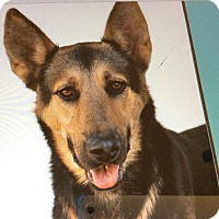 Adopt A Pet :: ATLAS VON AUGEN - Los Angeles, CA