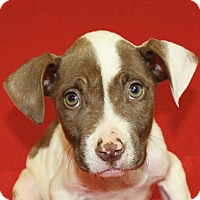 Adopt A Pet :: Leonardo - Jackson, MI