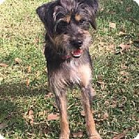 Adopt A Pet :: Shelley - Boca Raton, FL