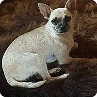 Adopt A Pet :: PRECIOUS - Coeburn, VA