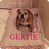 Adopt A Pet :: Gertie - Odessa, FL