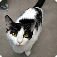 Adopt A Pet :: Tibbs - Virginia Beach, VA