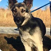 Adopt A Pet :: Tupelo - Hendersonville, NC