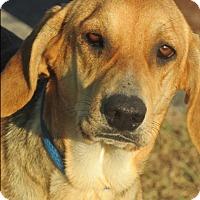 Adopt A Pet :: Jenny - Mount Sterling, KY