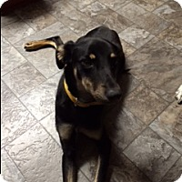Adopt A Pet :: Brandy - Aurora, IL