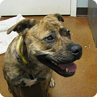 Adopt A Pet :: Ahnna - Groton, MA