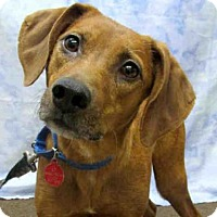 Adopt A Pet :: ABBY - Pittsburgh, PA