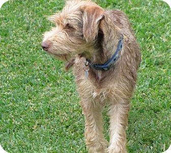 Flynn | Adopted Puppy | 13-0524 | Flower Mound, TX ...