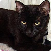 Adopt A Pet :: Selena - River Edge, NJ