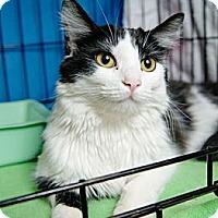 Adopt A Pet :: Kentucky Blue - Gaithersburg, MD